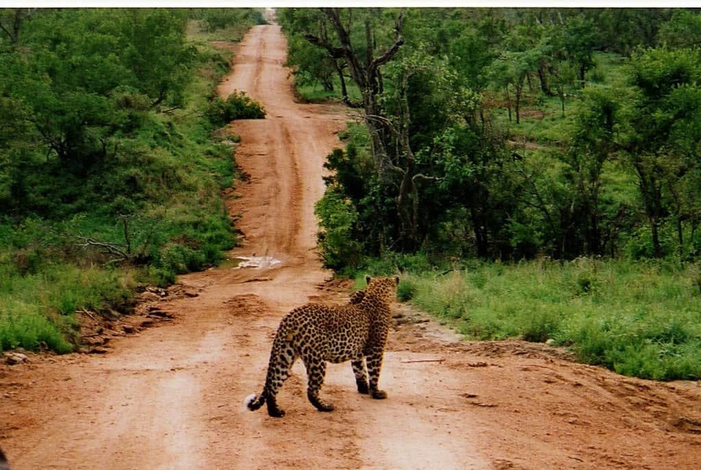 Kruger242, dream destination, Kruger National Park
