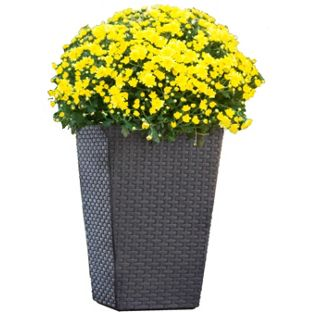 planter yellow