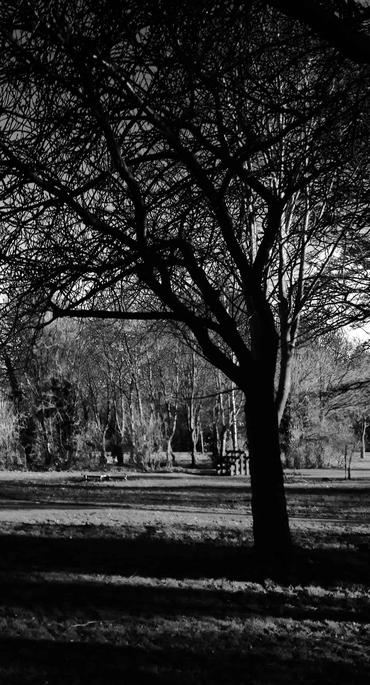 park drama, Drama on the Park