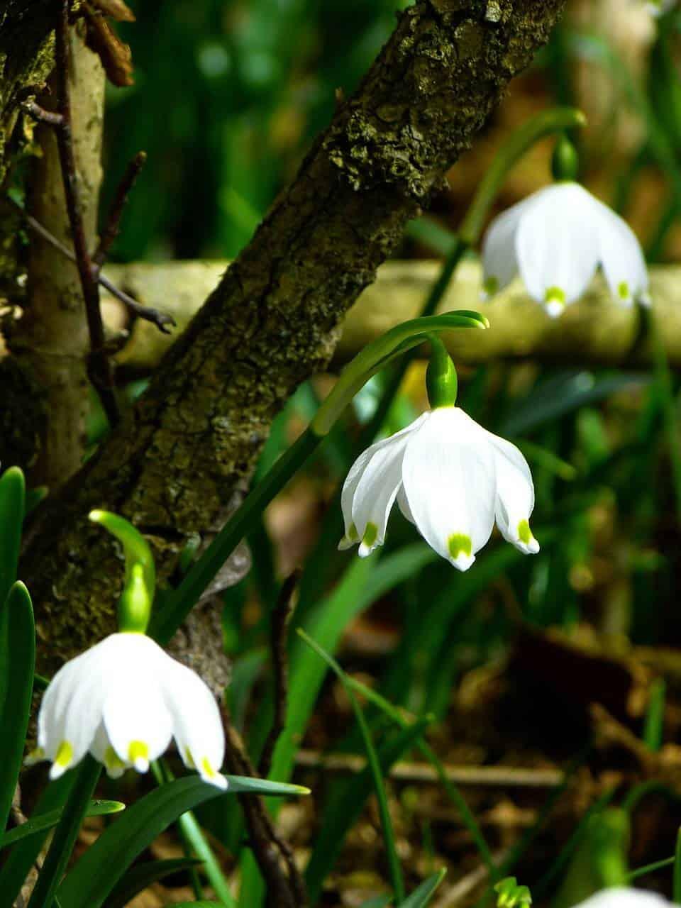 Get Your Garden Spring Ready
