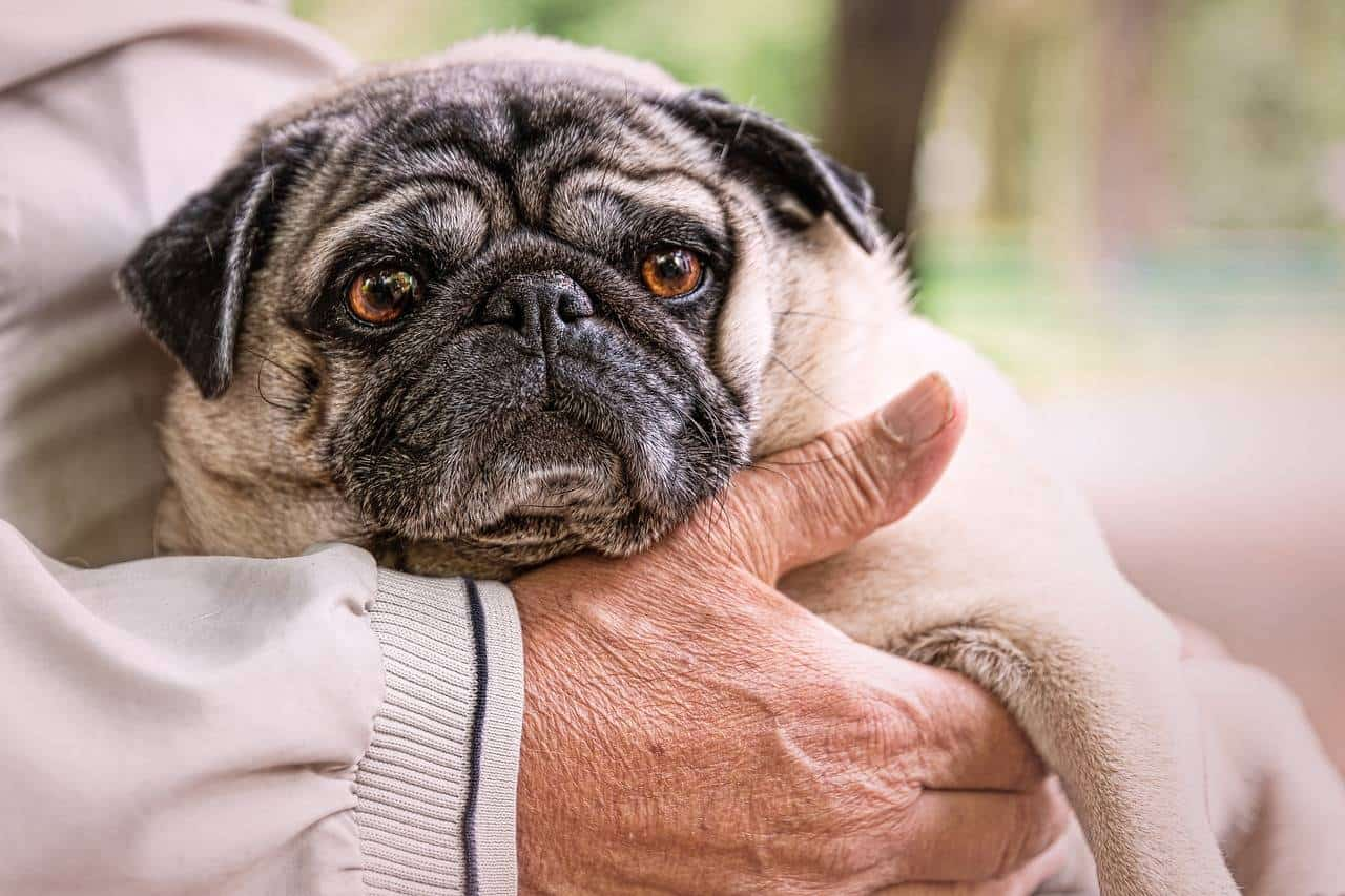 Here are the Top Reasons Why Pets are Good for Your Wellbeing