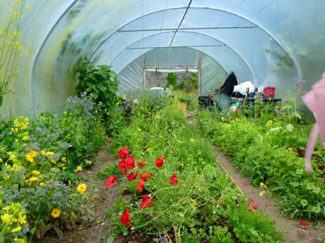 5 Things Gardeners Need to Know About Polytunnels