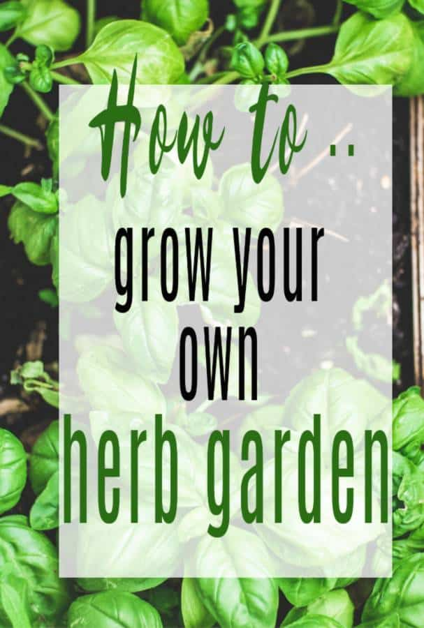 Growing a Container Herb Garden