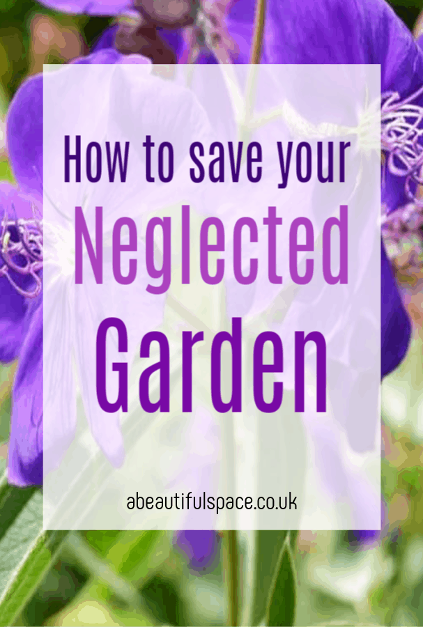 save your neglected garden, how to save your garden witht hese simple and highly effecting tips that will give it a much need revamp and restore it to its glory #gardentips #gardeningtips #gardenhacks #gardenmakeover #neglectedgarden