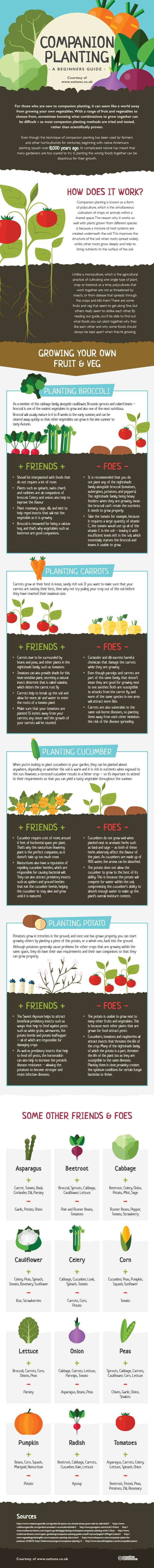 An introduction to companion planting