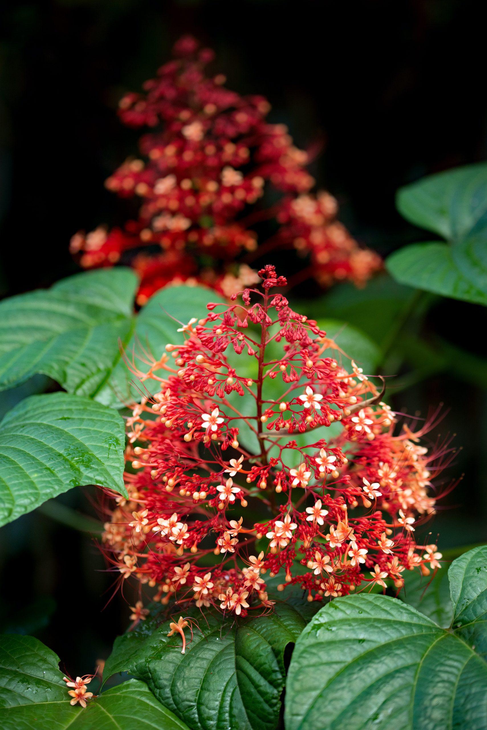 Tropical Garden in the UK