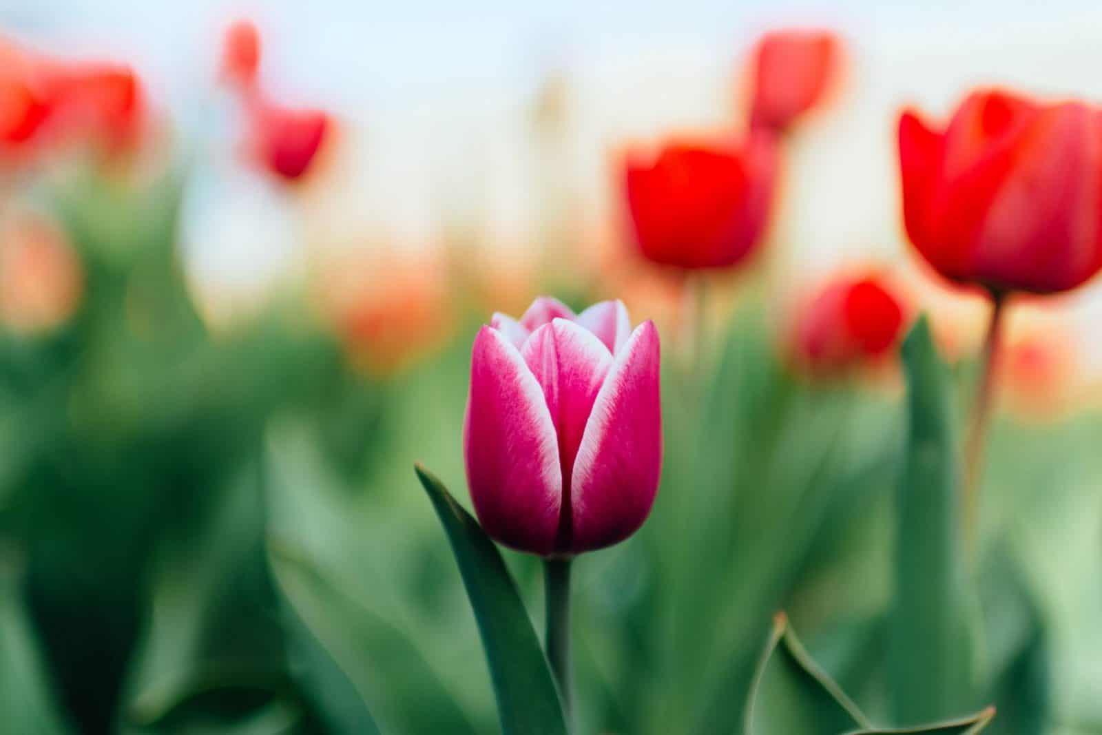 Effortless Spring Garden,