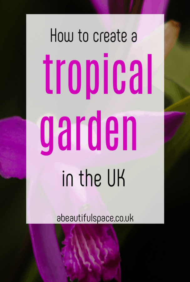 Tropical Garden in the UK, how to create a tropical garden some top tips to bring the exotic to a UK garden #topicalgarden #gardenrevamp #exoticgarden #bamboo