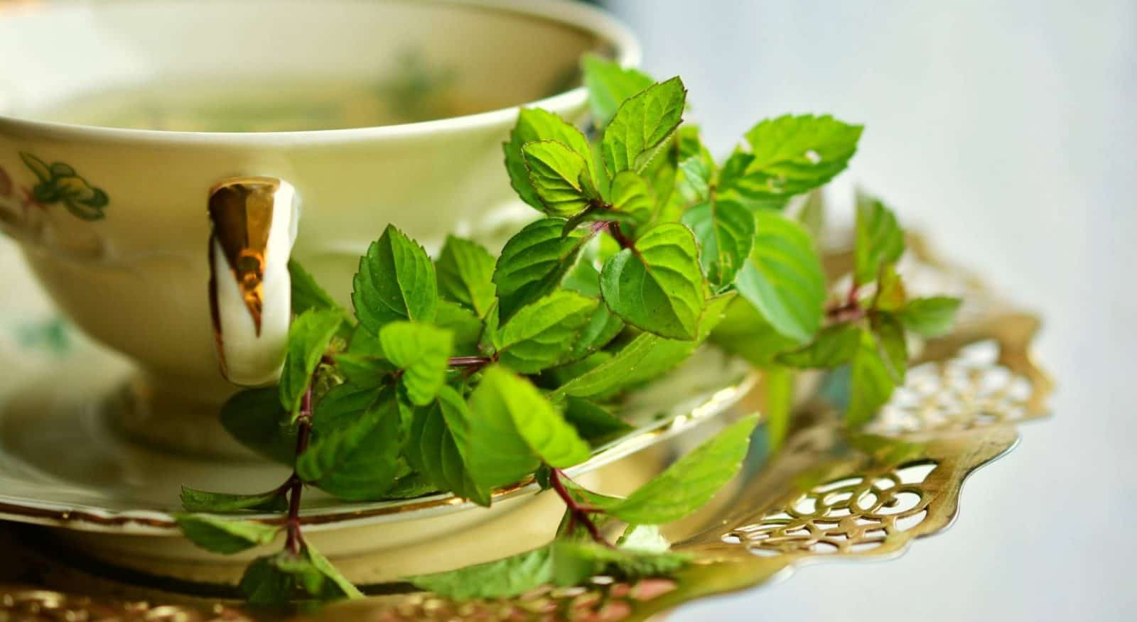 Natural Scents of Herbs