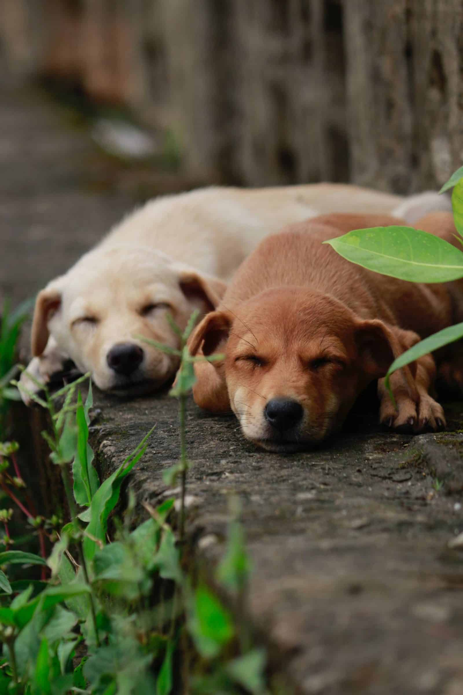 Plants That Pet Owners Should Avoid