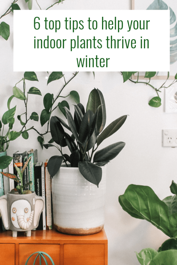 tips to help your indoor plants thrive in winter, your indoor plants thrive in winter