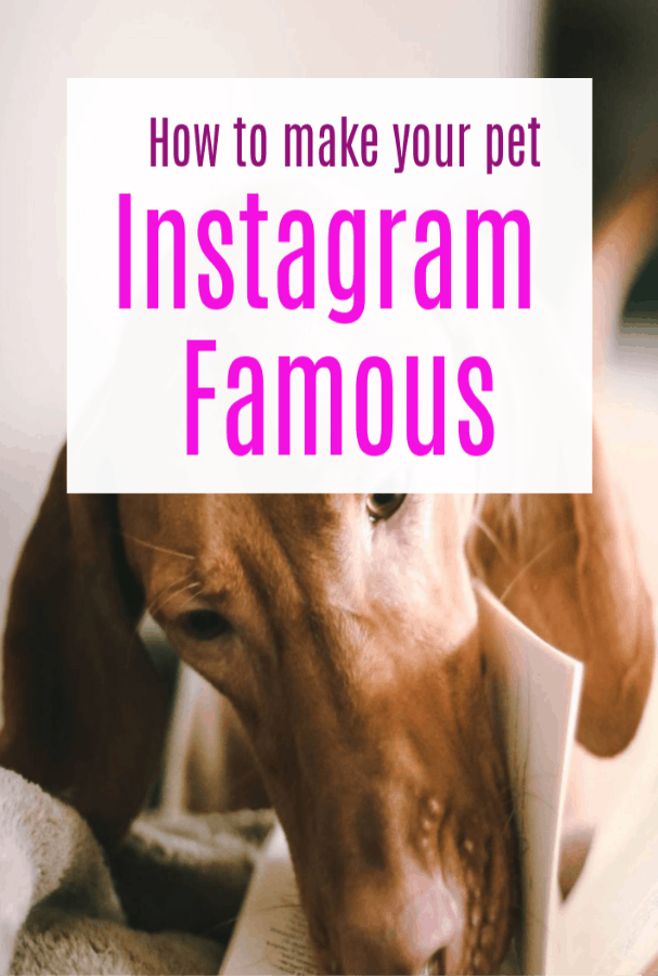 How to make your pet instagram famous