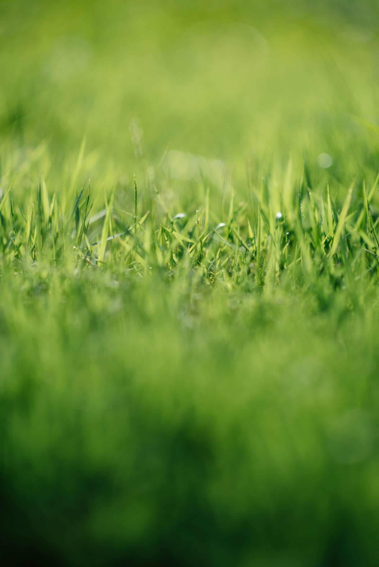 artificial grass, reasons to lay artificial grass