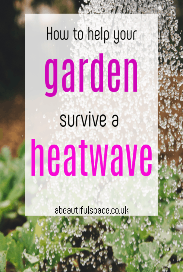 How to help your garden survive a heat wave, top tips to help your garden flourishh even when it is HOT! #gardeningtips #heatwave #summergarden