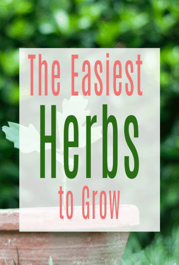 the easiest herbs to grow