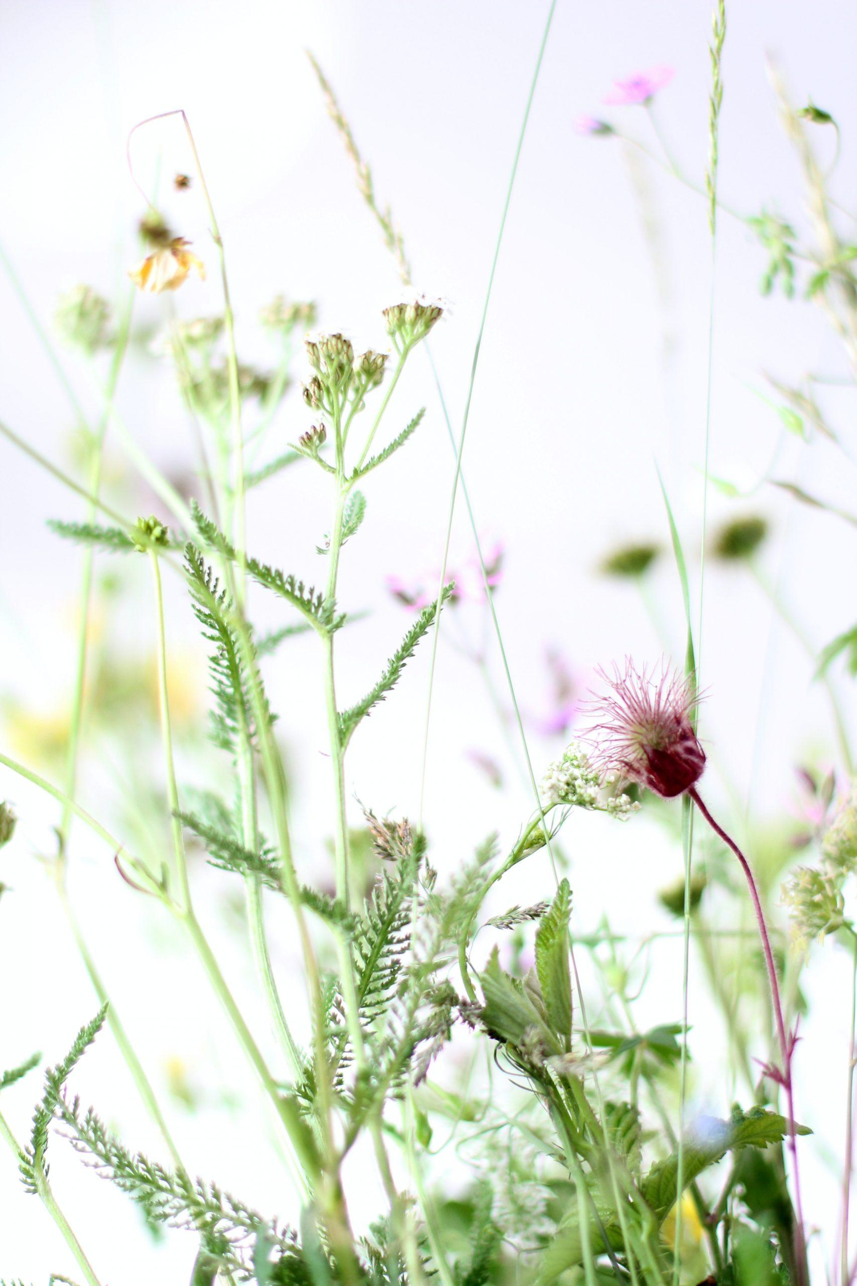 Easiest Herbs to Grow