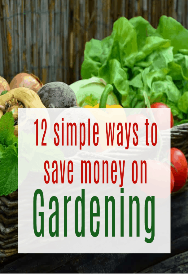 Cost-Effective Tips to Save on Gardening