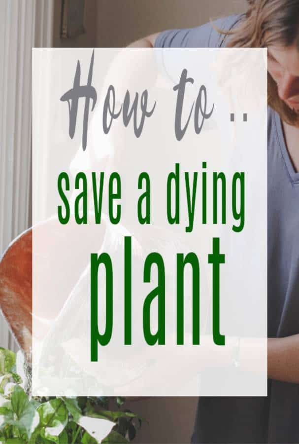 how to save a dying plant