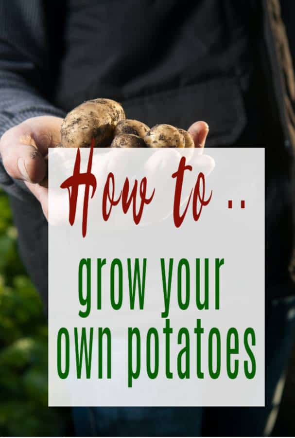 How are potatoes grown