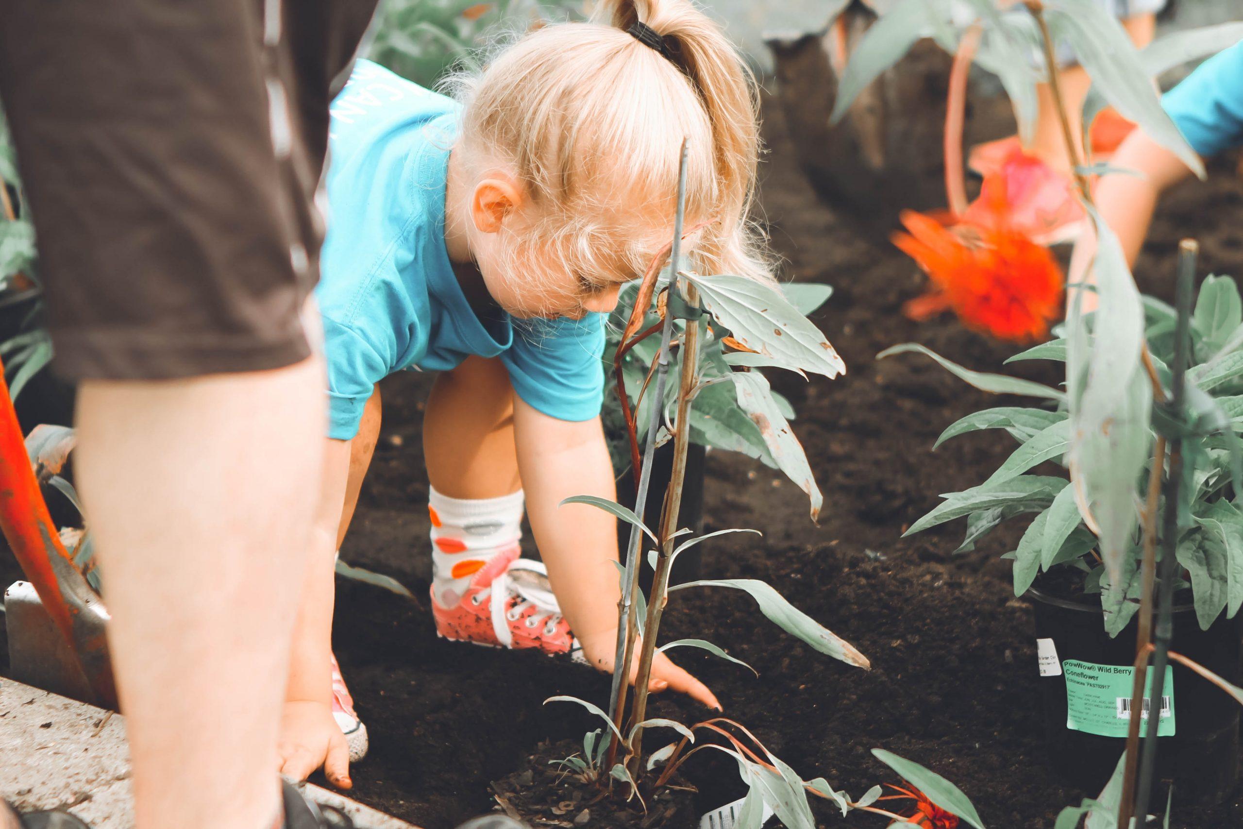 grow veggies in a tiny garden