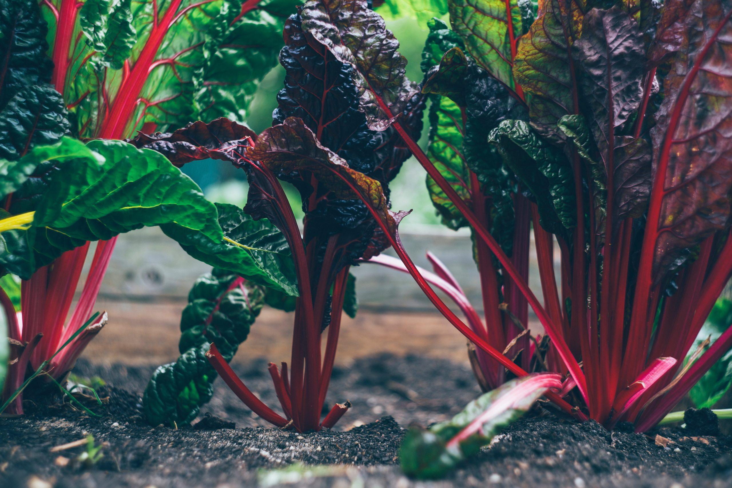 How to grow veggies in a tiny garden