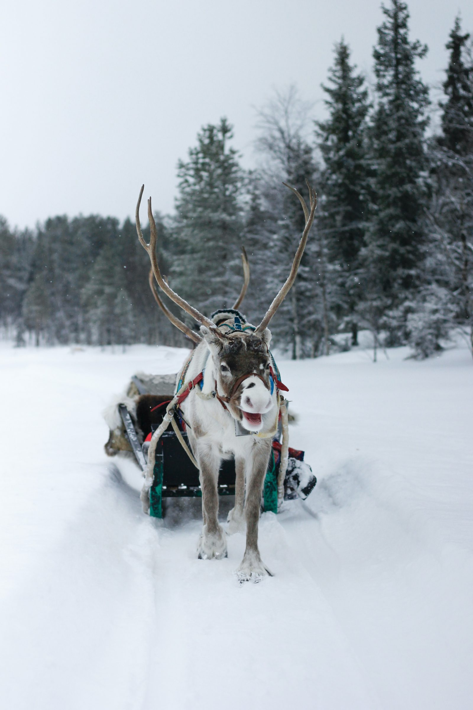 Food for Reindeer