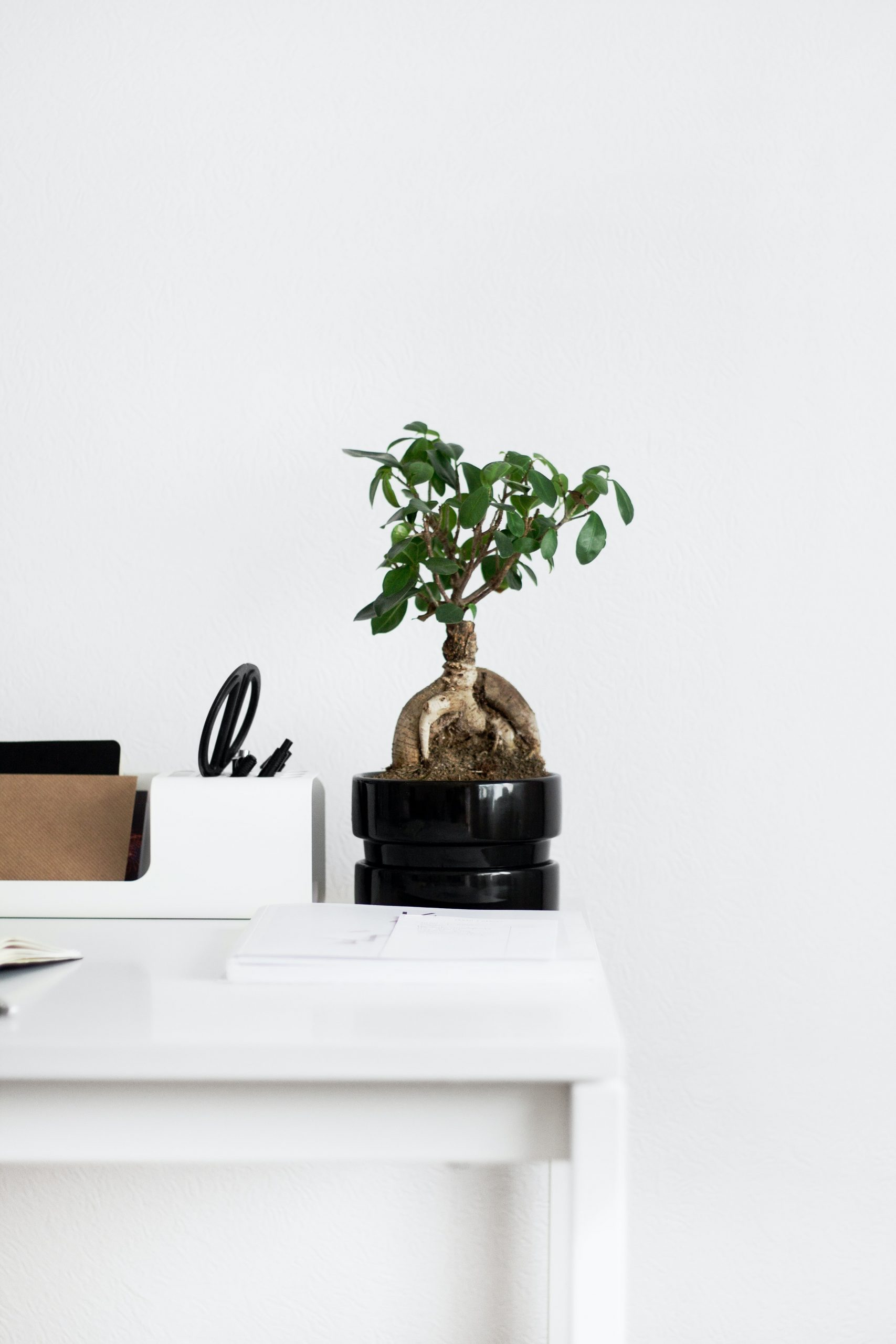 Decorate Your Home Office to Positively Impact Mood and Performance