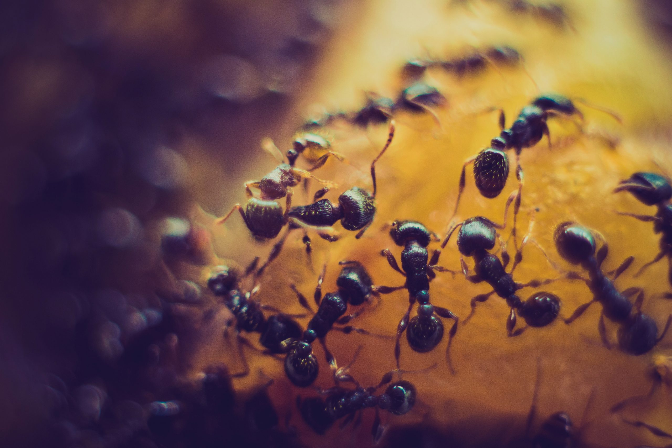 What are the Pros and Cons of DIY Pest Removal?