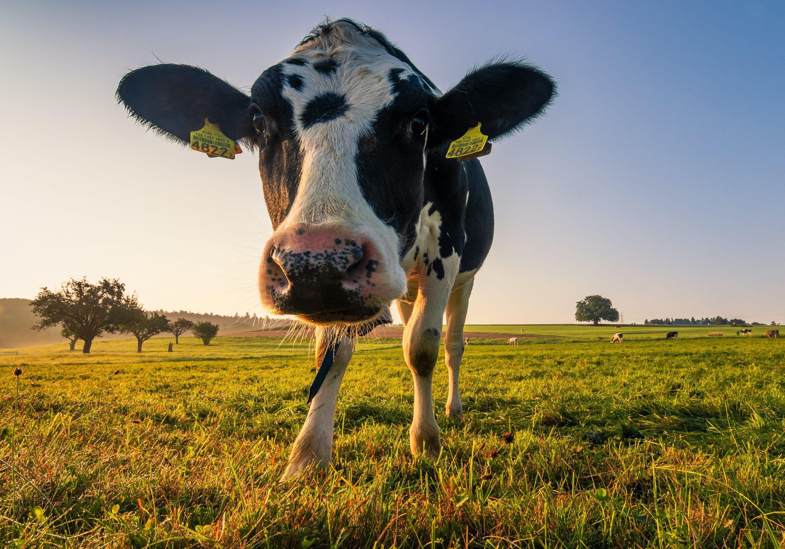 organic production of baby milk formula