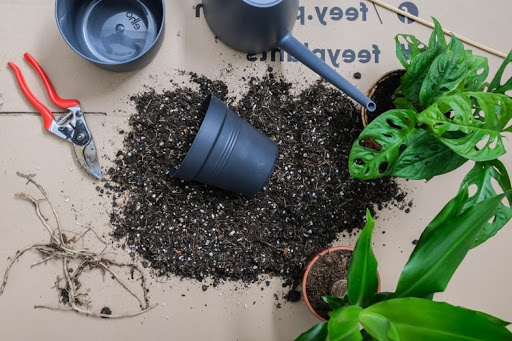 Mistakes to Avoid When Repotting Plants