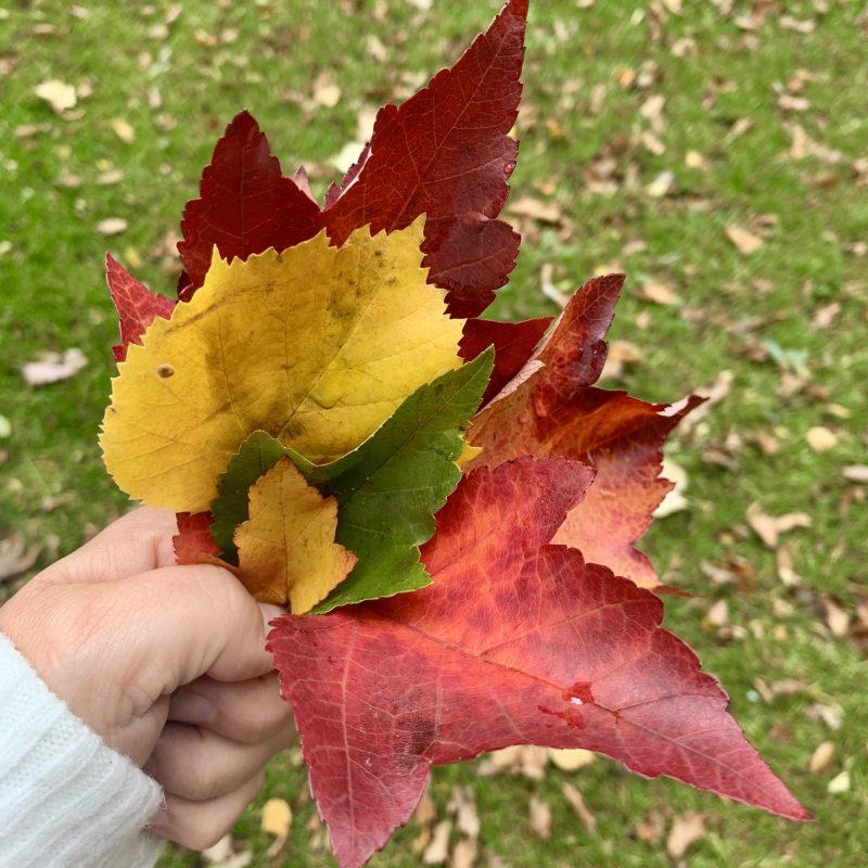 Autumn Crafts Ideas for Kids