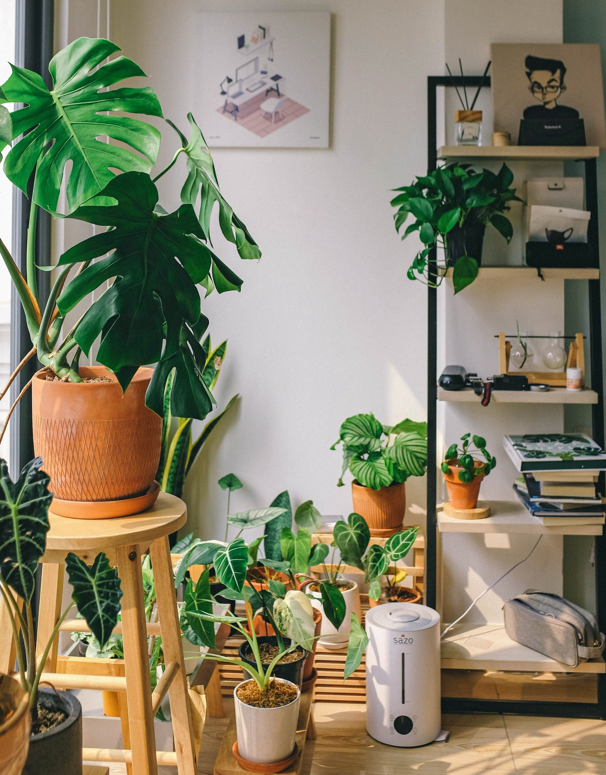 tips for keeping your houseplants watered whilst you're away on holiday