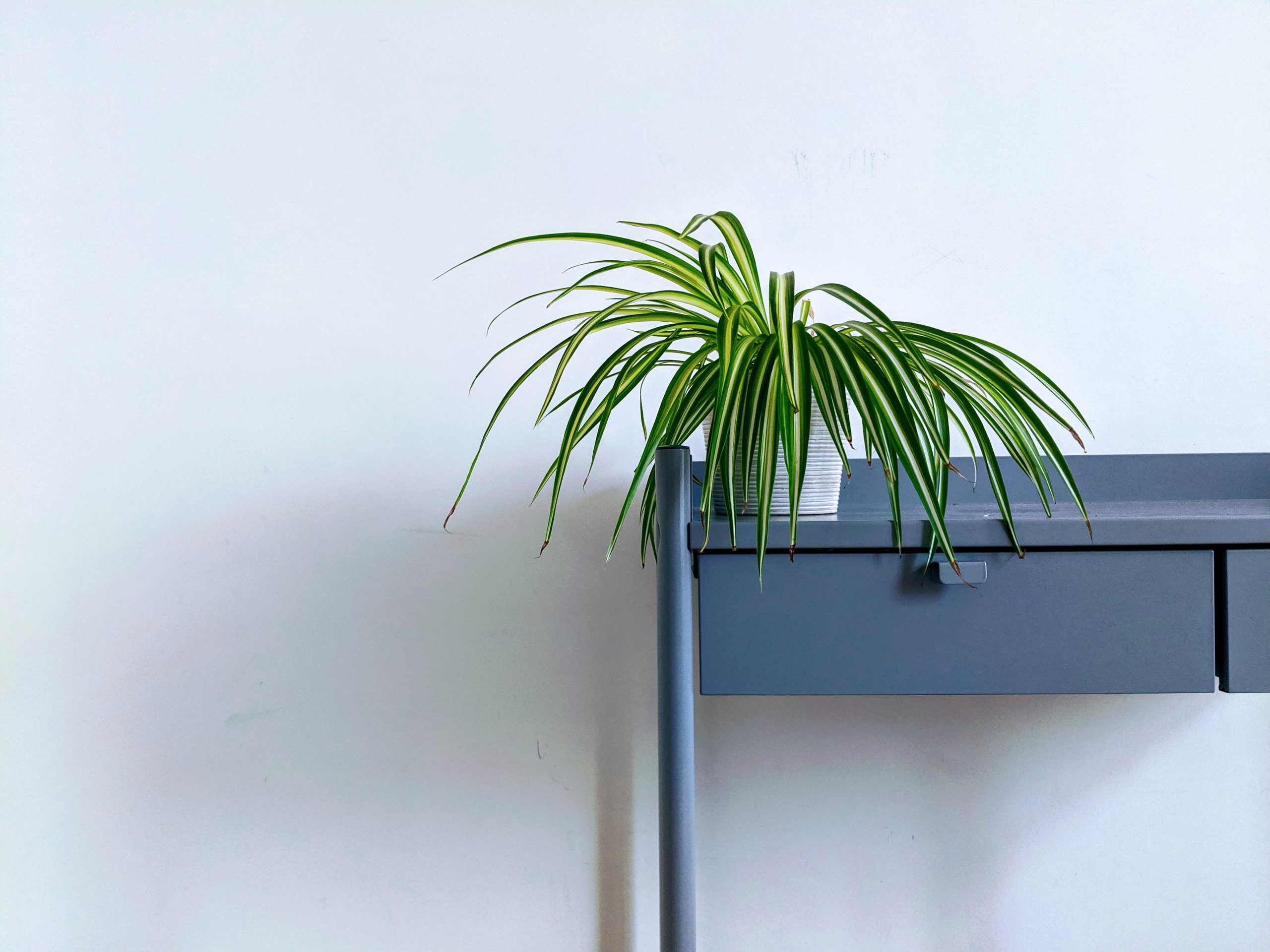 4 perfect indoor plants to beautify your interiors
