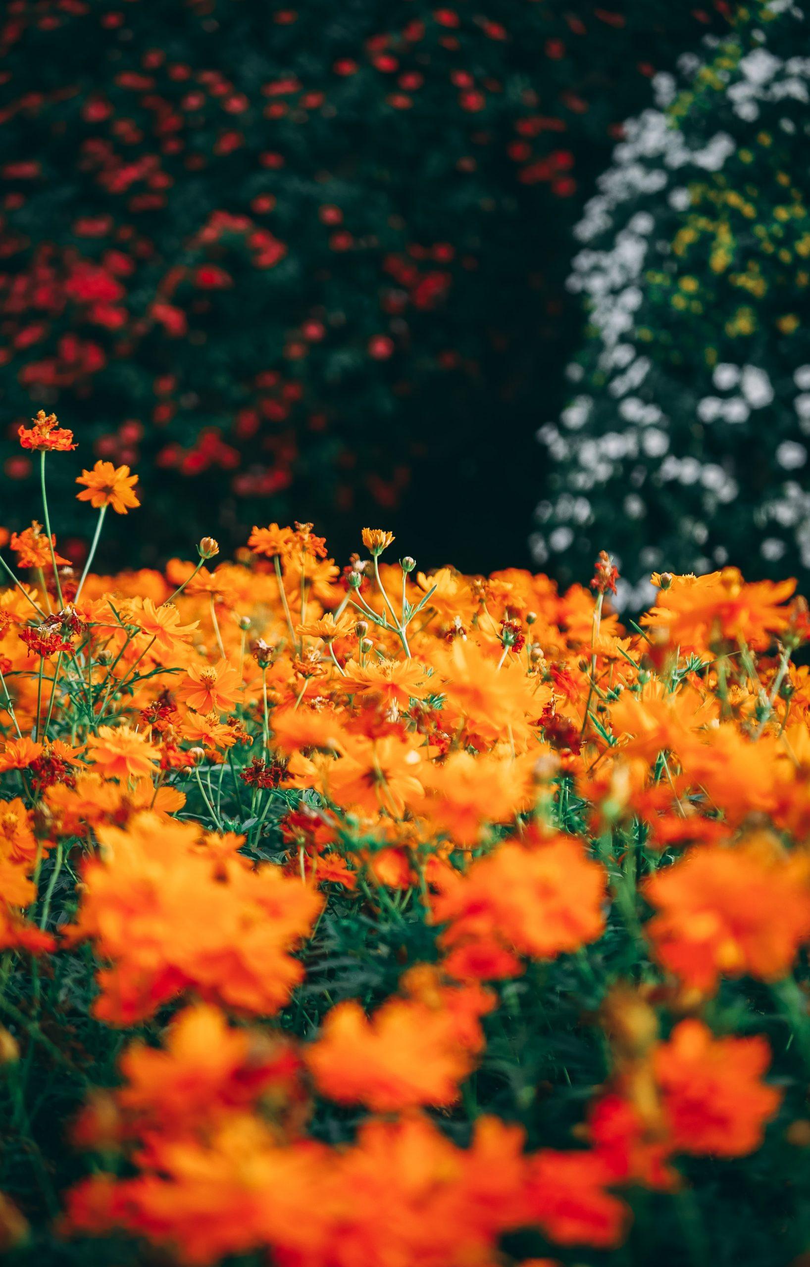 Three Ways to Improve your Garden: