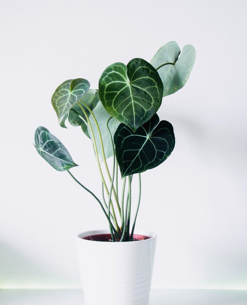 5 tips for keeping your houseplants watered whilst you?re away on holiday