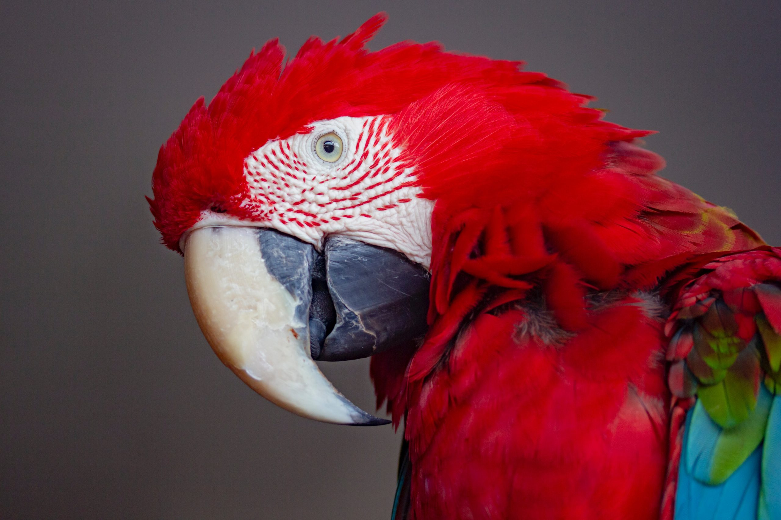 Consider These 6 Things Before Getting A Pet Bird