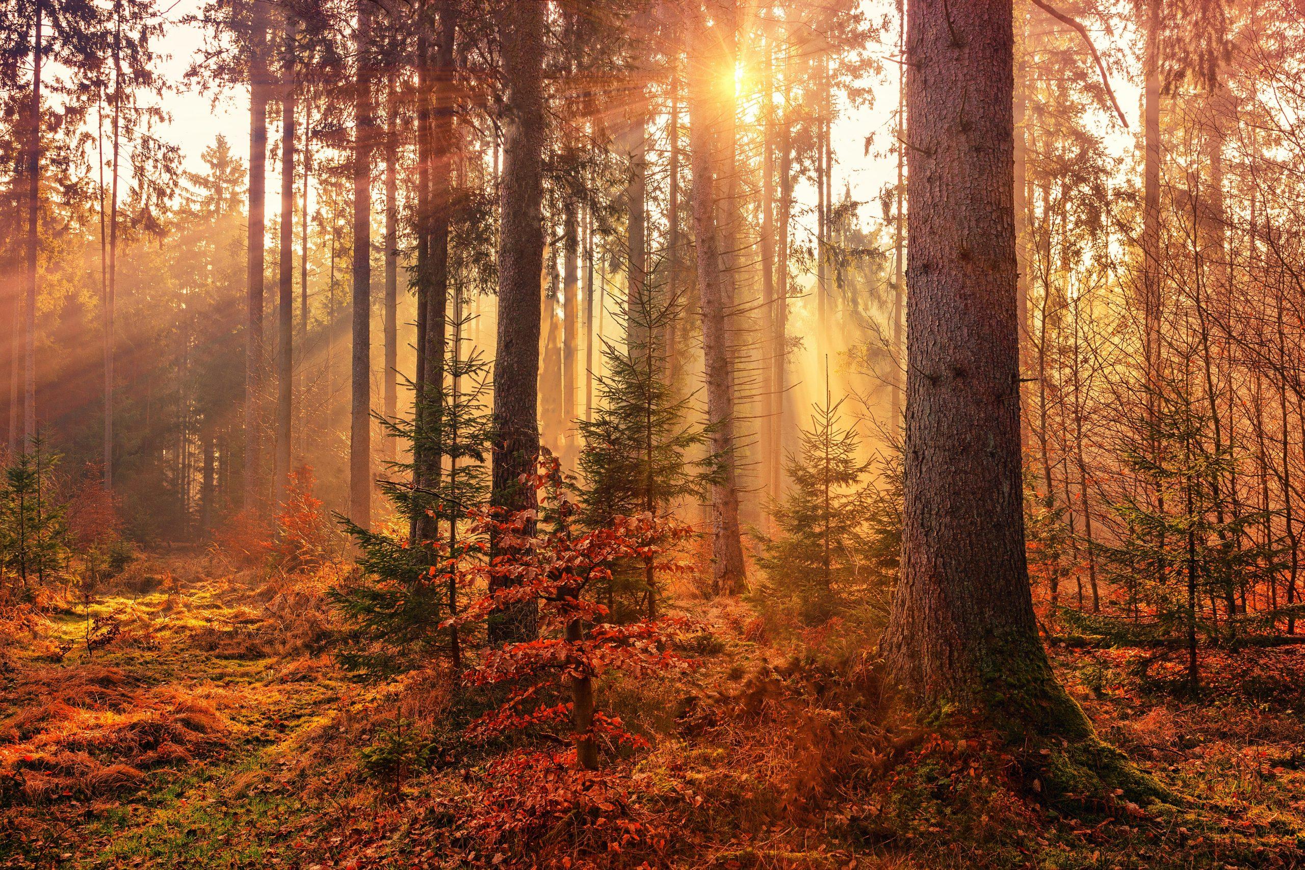 perfect fall photo